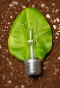 img-biomasa