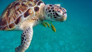 img- tortuga-marina