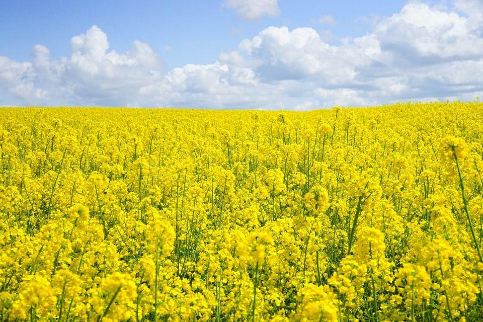 img-agricultura-aplicación-desalación
