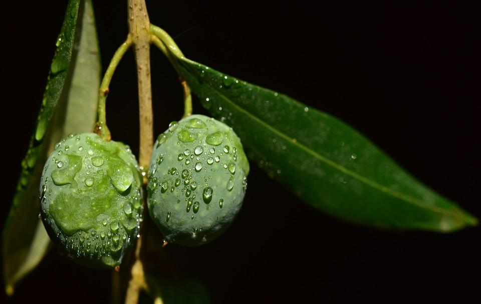 agua y oliva