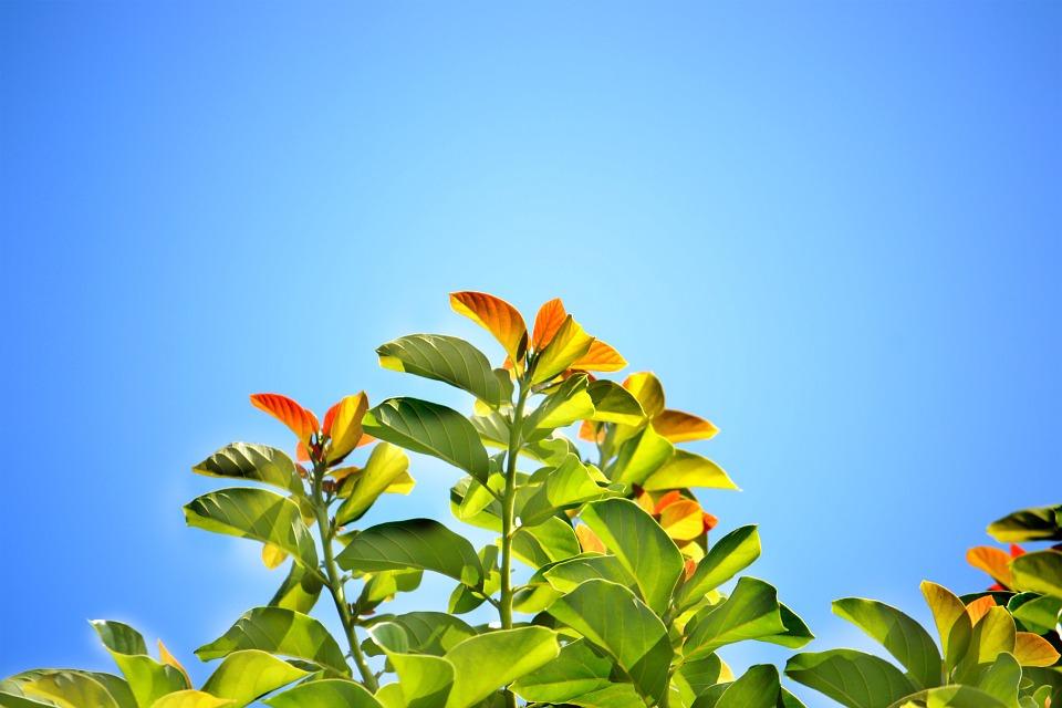 plantas sri lanka